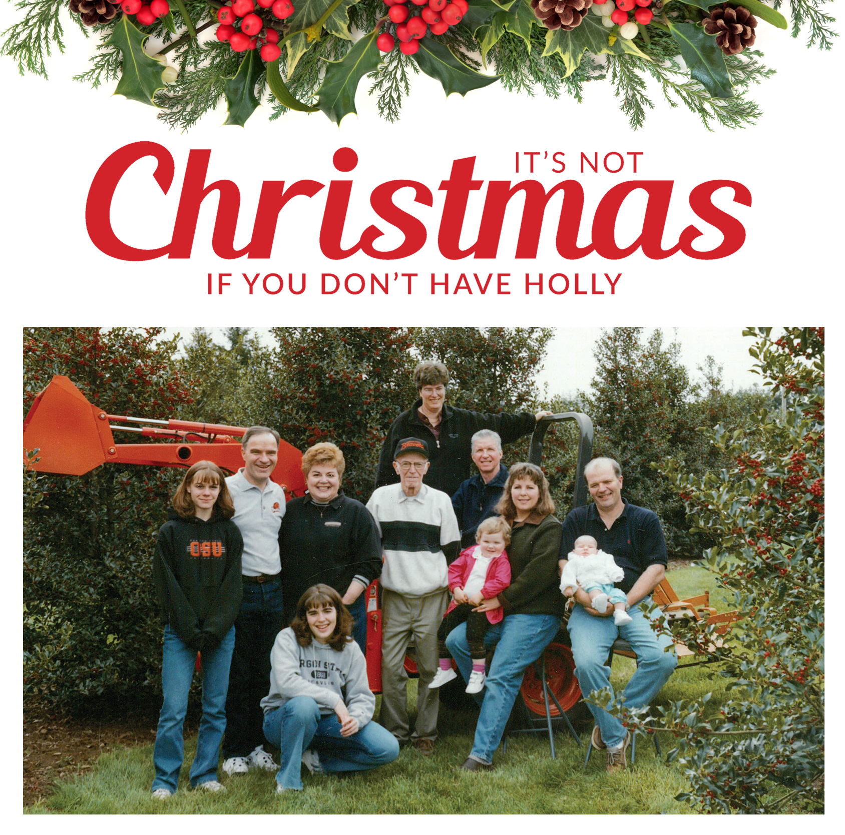 It's Not Christmas If You Don't Have Holly - Fresh holly used for Christmas Garlands and Holiday Wreaths