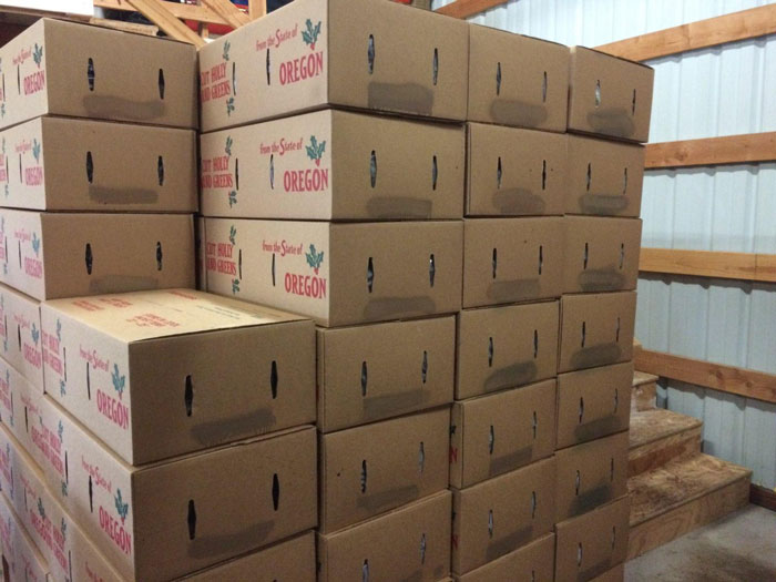 Boxes of fresh and festive holiday holly ready to ship