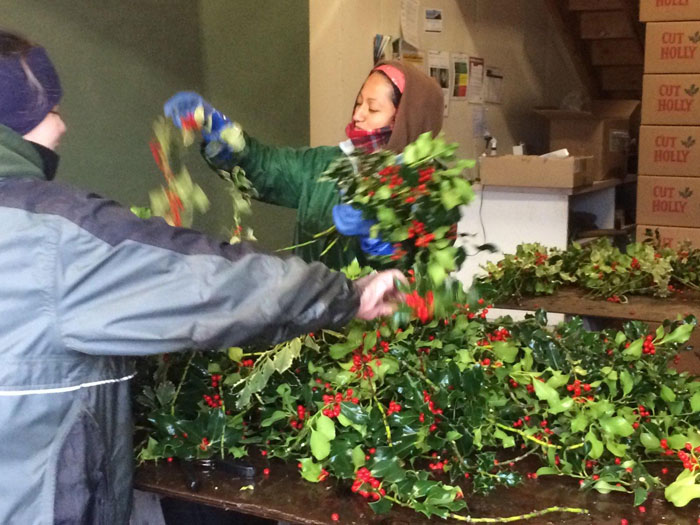 Florists unpacking holly for garlands and decorations